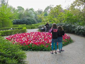 Tulips garden in Amsterdam, Vondelpark
