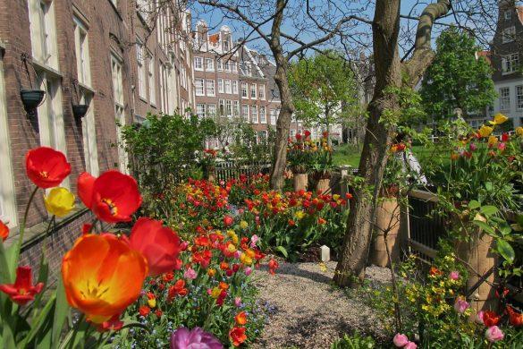 Garden in Amsterdam