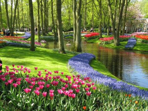 Easter in Amsterdam - Tulip fields of Keukenhof