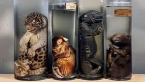 weird museum in Amsterdam